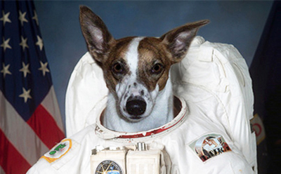 EWF First Dog on the Moon