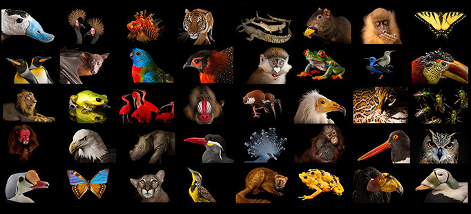 National Geographic Photo Ark - photo by Joel Sartore