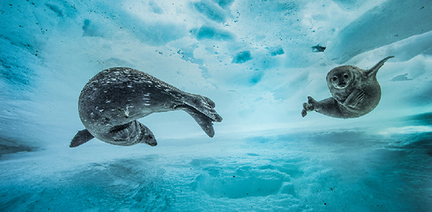 Wildlife Photographer of the Year - Laurent Ballesta - Swim gym