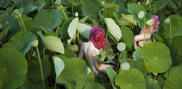 NAG Tamara Dean,Sacred Lotus (Nelumbo nucifera) in Summer,2018 (detail)
