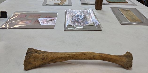 GAC Elephant Bone