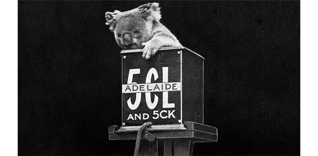 Koala - courtesy of abc archives_flickr