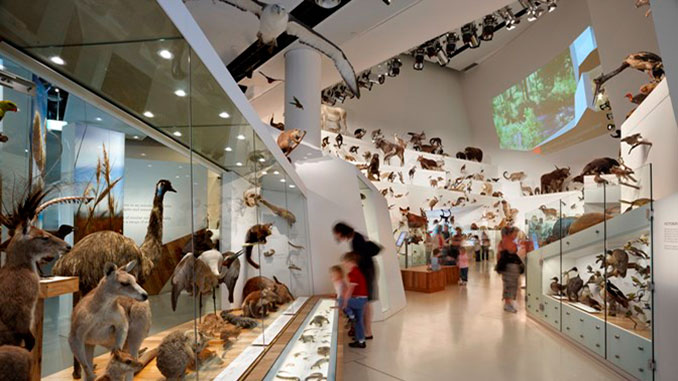 Melbourne-Museum-Wild-Gallery-photo-by-Dianna-Snape